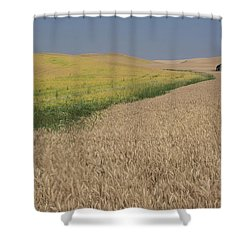 Field Of Plenty Shower Curtain