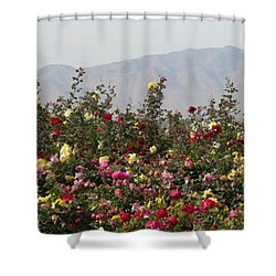Field Of Roses Shower Curtain by Laurel Powell