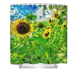 Field Of The Suns  Shower Curtain