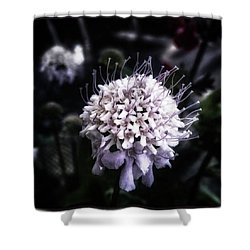 Shower Curtain featuring the photograph Field Scabious. A Member Of The by Mr Photojimsf