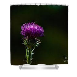 Field Thistle Shower Curtain