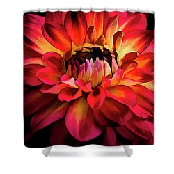 Fiery Red Dahlia Shower Curtain by Julie Palencia
