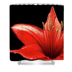 Shower Curtain featuring the photograph Fiery Red by Judy Vincent