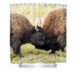 Fight  Shower Curtain by Larry Ricker