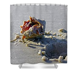 Fighting Conch On The Beach Shower Curtain