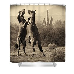 Shower Curtain featuring the photograph Fighting Stallions by Frank Stallone