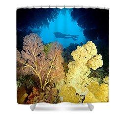 Fiji Underwater Shower Curtain by Dave Fleetham - Printscapes