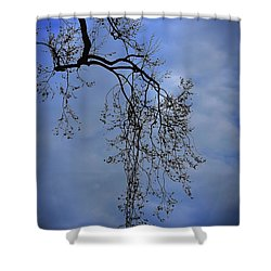 Shower Curtain featuring the photograph Filigree From On High by Skip Willits