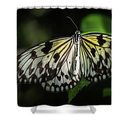 Final Metamorphosis Shower Curtain