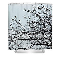 Finches To The Wind Shower Curtain