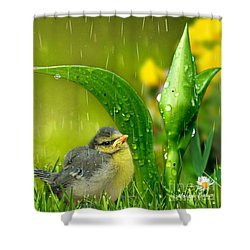 Finding Shelter Shower Curtain
