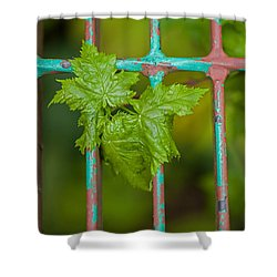Shower Curtain featuring the photograph Finding The Light by Fran Riley