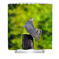 Shower Curtain featuring the photograph Fine Feathers by Al Powell Photography USA
