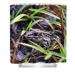 Shower Curtain featuring the photograph Fine Frog by Al Powell Photography USA