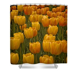 Fine Lines In Yellow Tulips Shower Curtain by Michael Flood
