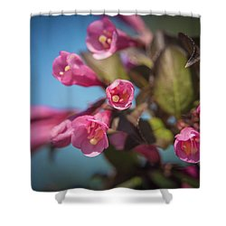 Shower Curtain featuring the photograph Fine Wine Weigela by William Lee
