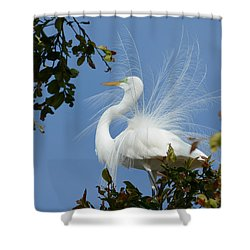 Shower Curtain featuring the photograph Finery by Fraida Gutovich