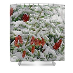 Shower Curtain featuring the photograph Fir Cones On White Photo Art by Sharon Talson