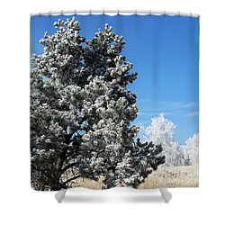 Fir Full Of Ice Shower Curtain