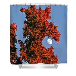 Fire Dragon Tree Eats Moon Shower Curtain by CML Brown