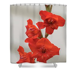 Fire Red Gladiolas Shower Curtain