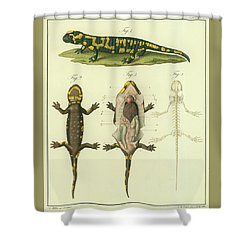 Shower Curtain featuring the drawing Fire Salamander Anatomy by Christian Leopold Mueller