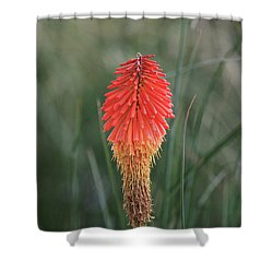 Firecracker Shower Curtain