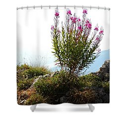 Fireweed Epilobium Angustifolium Shower Curtain