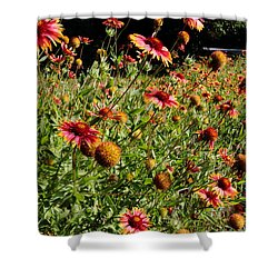 Firewheel Wildflower Shower Curtain