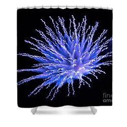 Firework Blue Shower Curtain