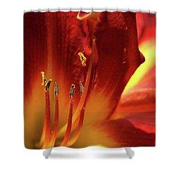 Firey Lily Shower Curtain by Sabrina L Ryan