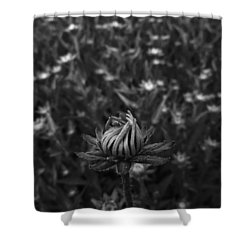 First Among Many Shower Curtain by Tim Good