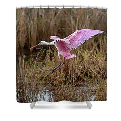 First Arrival Shower Curtain