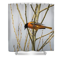 Shower Curtain featuring the photograph First Baltimore Oriole Of The Year  by Ricky L Jones