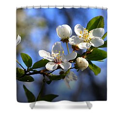 First Blossoms Shower Curtain