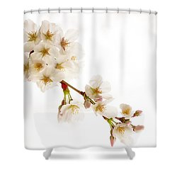 Shower Curtain featuring the photograph first blossoms on the Basin by Edward Kreis