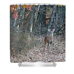 First Buck  Shower Curtain by Brenda Bostic