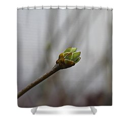 First Bud Shower Curtain