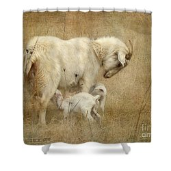 First Day Of Life Shower Curtain by Kathy Russell