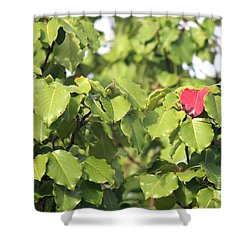 First Fall Leaf Shower Curtain