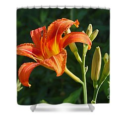 Shower Curtain featuring the photograph First Flower On This Lily Plant by Steve Augustin
