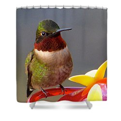First Hummer Of 2015 Shower Curtain