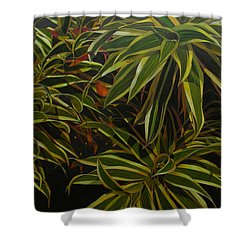 First In Cabot Shower Curtain by Thu Nguyen