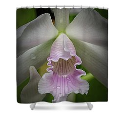 First Orchid Straight On Shower Curtain
