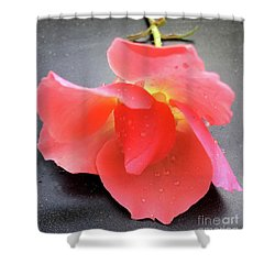First Rose  Shower Curtain