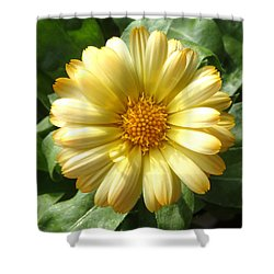 First Sign Of Summer Shower Curtain