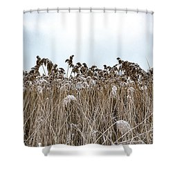 First Snow On Roman Reed Shower Curtain