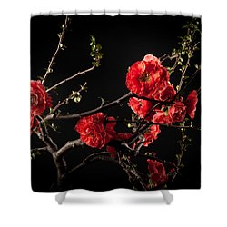 First Spring Blossom Shower Curtain by Catherine Lau