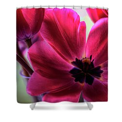 First To Wake Shower Curtain by Brad Granger