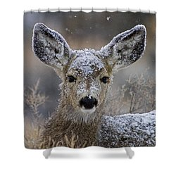 First Winter-signed Shower Curtain